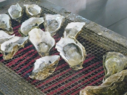 Dish1-Grilled Oysters the Size of My Hand