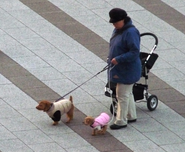 puppypuffycoats