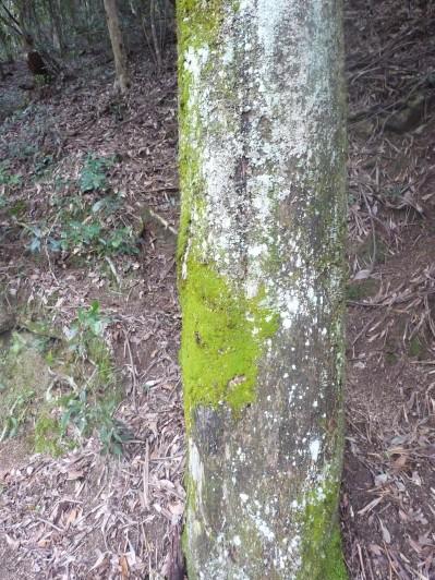 Shockingly green moss