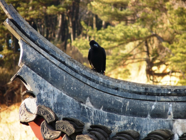 Raven notices me