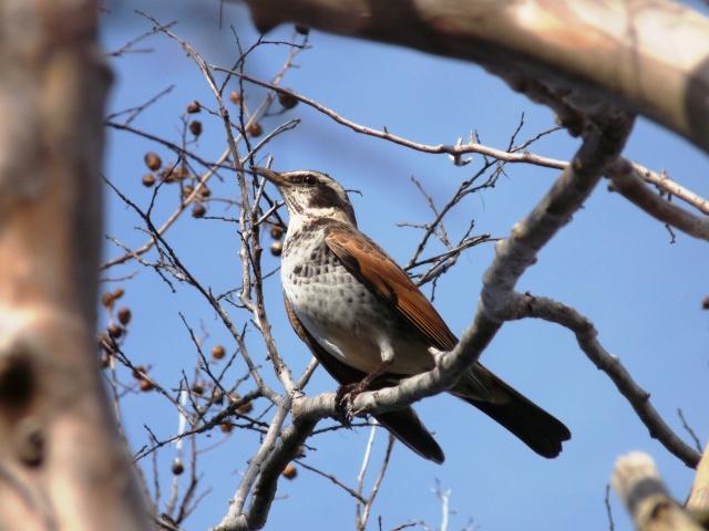 Pretty bird amongst the buds