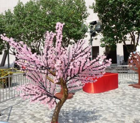 lantern-cherrytree