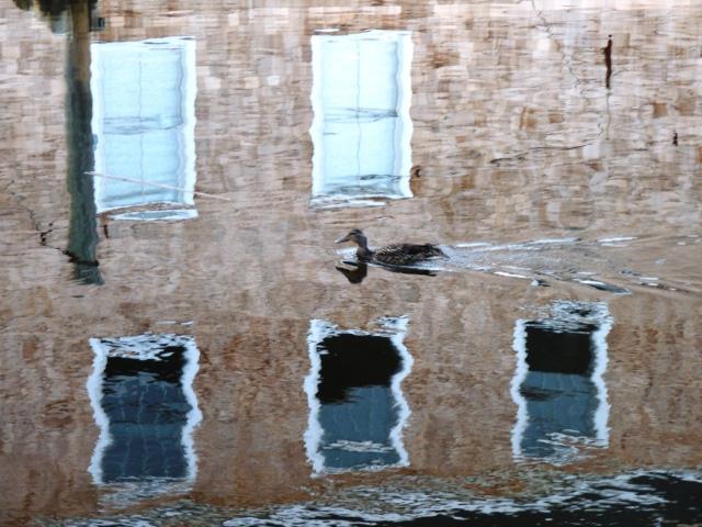 1-duck