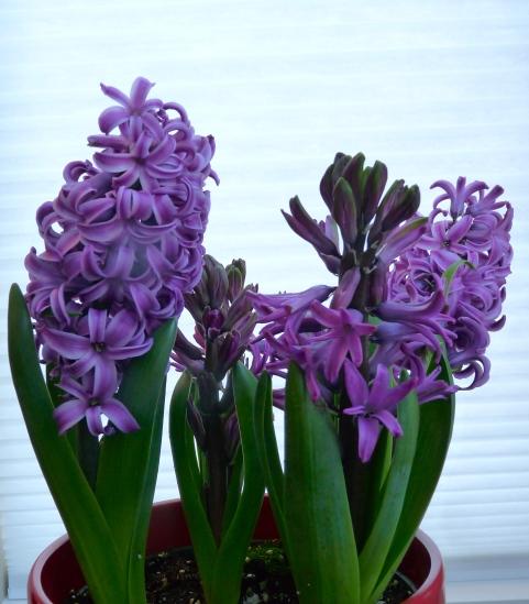 Creating My Indoor Spring